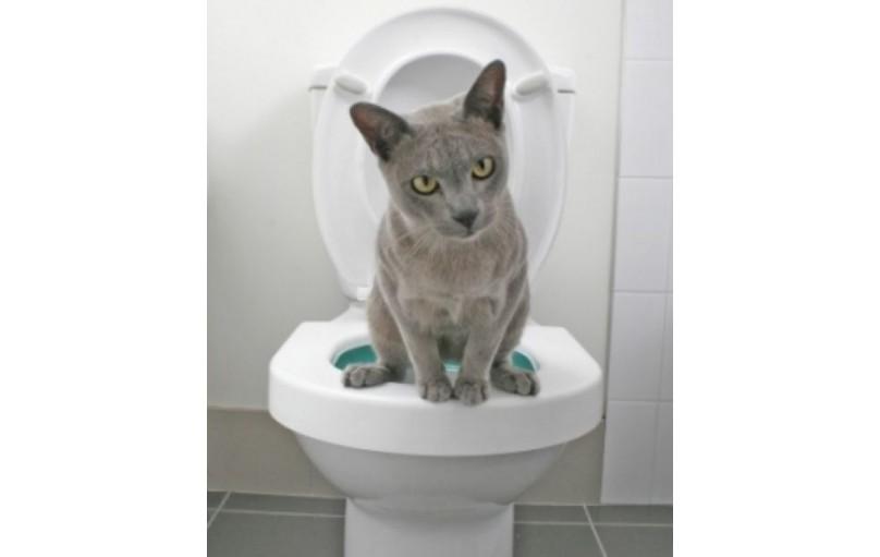 Kedilerde Kabızlığın Çözümü