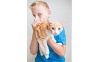Kedi ajerjisi olabilir misiniz ? Kedi alerjisi belirtileri ve Çözümü