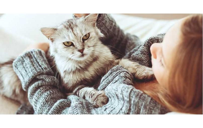 Kedilerdeki iç dış parazitler insana bulaşır mı ?