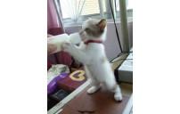 Bir yavru kediyi biberonla beslemek