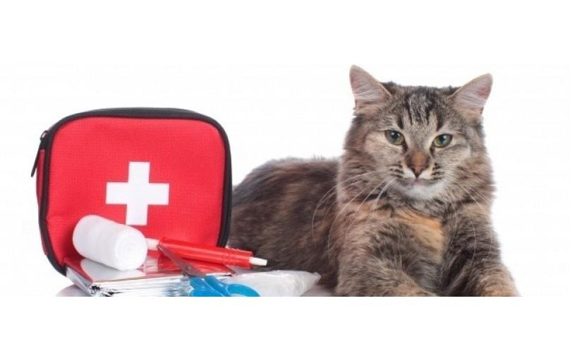 Bir Kedinin İlkyardım Çantası Nasıl Yapılır
