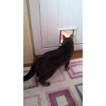 Kedi Kapısı Eğitimi
