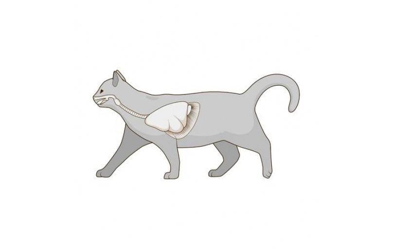 Kedinizin Solunum Hızını Nasıl Kontrol Edebilirsiniz?