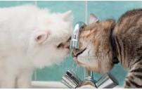 Kedinizin Günlük Su Tüketim Miktarı Nedir.