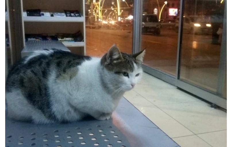 Kediler için Soğuk Hava İpuçları