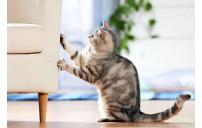 Kedi tırmalama sorunu ve çözüm önerileri