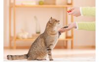 Kedinizi nasıl eğitirsiniz ?