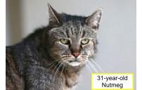 Yaşlı Kediler Cilt, Saç ve Diğer Sorunlar