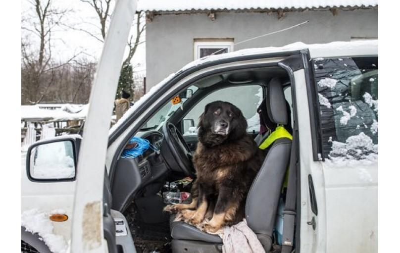 Köpeğiniz arabalardan korkarsa ne yapmalı?