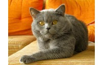 Kedinizin kötü davranışını nasıl düzeltirsiniz