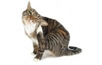 Kedi ve Köpeklerde Pireden kurtulmak isteyenlere