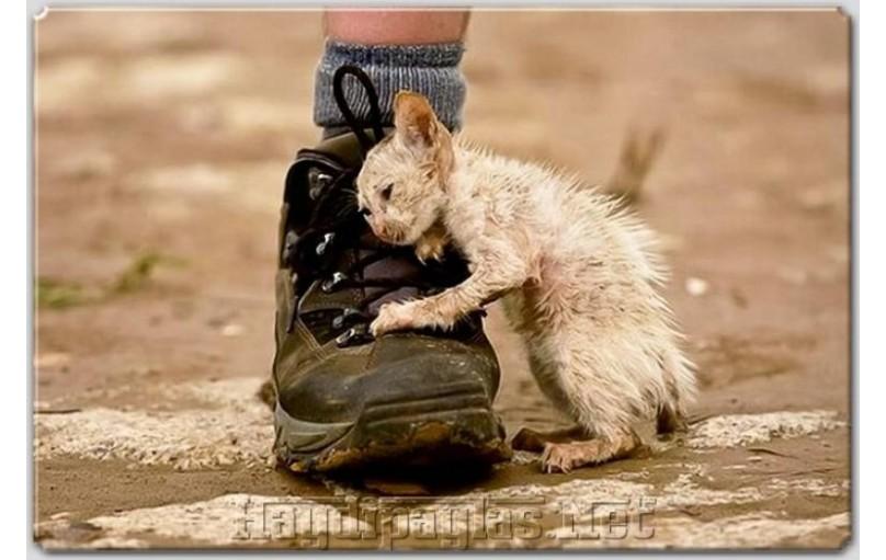 Sokak Hayvanları için umut olmak istemez misiniz?